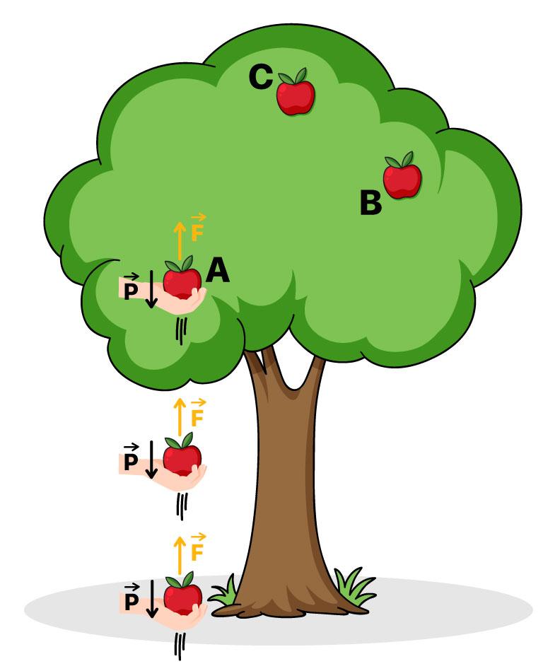 Maçã sendo erguida até a árvore