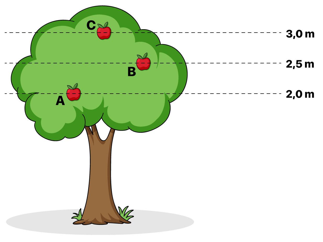 Árvore com maçãs em diferentes alturas