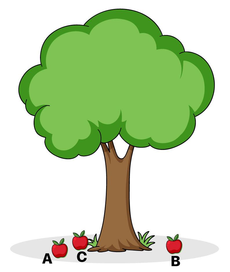 Árvore com maçãs caídas no solo