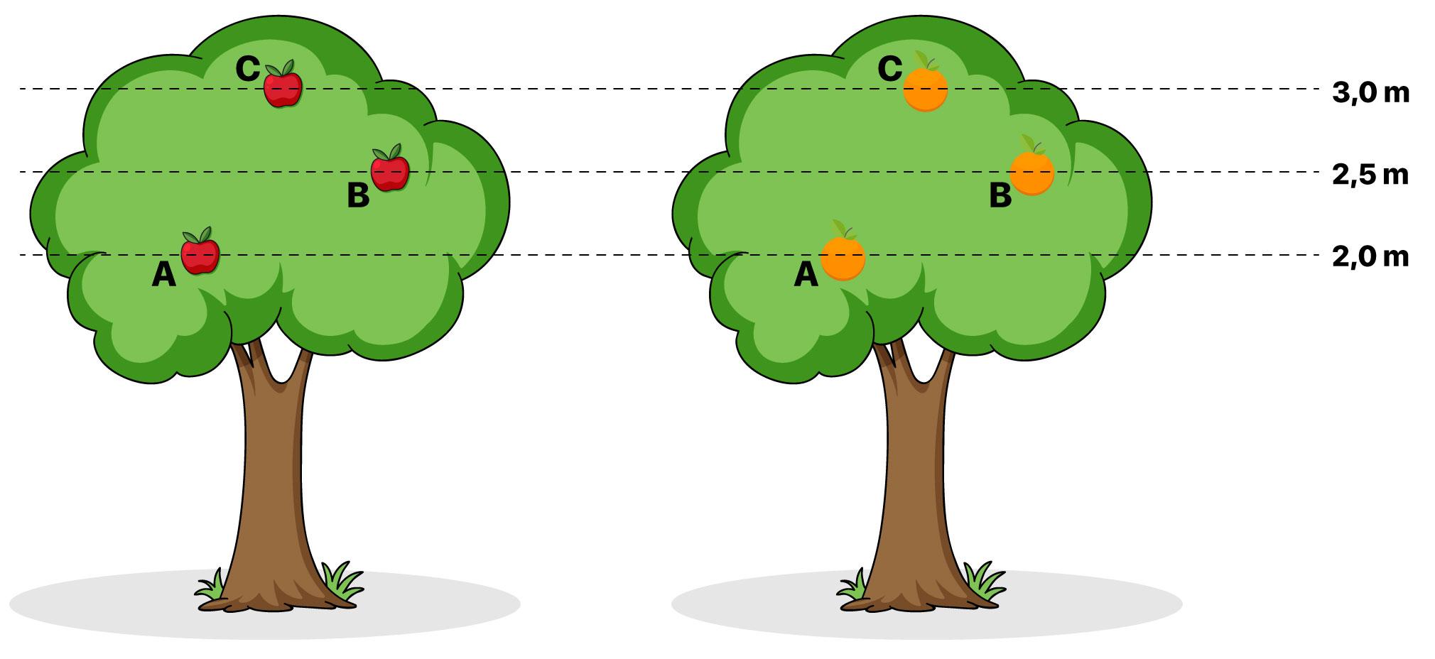 Árvores com maçãs e laranjas na mesma altura