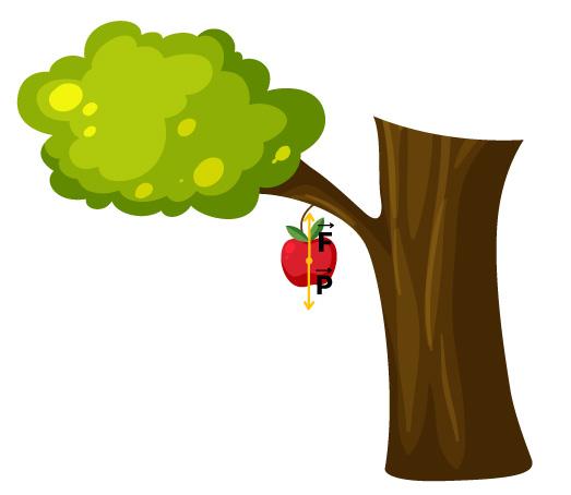 Desenho mostrando a soma das forças sobre uma maçã para diferenciar forças e pares de ação e reação.